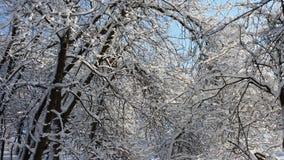 Зима в парке стоковое фото