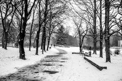 Зима в парке Стоковые Изображения RF