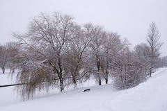 Зима в парке Стоковое Изображение