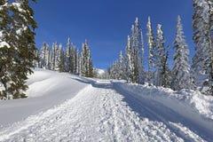 Зима в парке Mt более ненастном Стоковые Фотографии RF