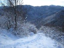 Зима в прикарпатских горах, Румыния Стоковые Фотографии RF
