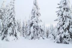 Зима в древесинах стоковое изображение rf