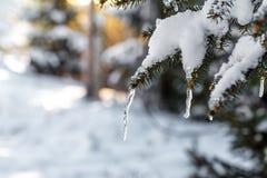 Зима в древесинах стоковое фото