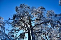 Зима в Сербии Zlatibor 2017 стоковое изображение