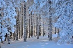 Зима в Сербии Zlatibor 2017 стоковое изображение rf
