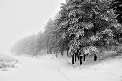 Зима в Сербии Zlatibor 2017 стоковое фото rf