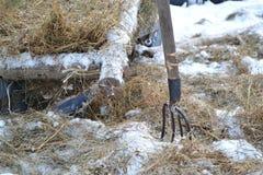 Зима в ферме Стоковое Изображение RF