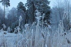Зима в Швеци Стоковые Изображения