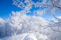 Зима в Bieszczady, Польше Стоковое Фото