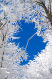 Зима в Bieszczady, Польше стоковая фотография rf