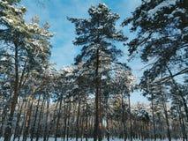 Зима в fairy лесе, зима 2016 Стоковые Изображения RF