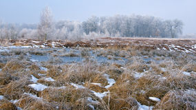 Зима в Haaksbergerveen Стоковые Фото