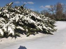 Зима в NC стоковые изображения rf