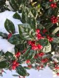 Зима в NC стоковые фотографии rf