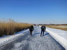 зима Голландии Стоковое Фото