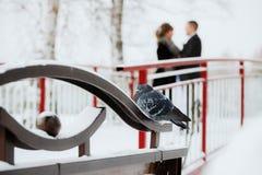 Зима голубя птицы Стоковые Изображения RF