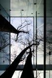 зима двора внутренняя Стоковое фото RF