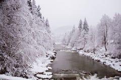 Зима Дерево в снежке Стоковые Изображения RF
