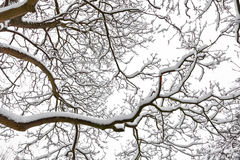 Зима. Деревья покрытые с снежком. Стоковое Изображение