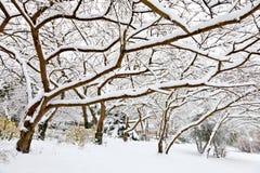 Зима. Деревья покрытые с снежком. стоковое фото