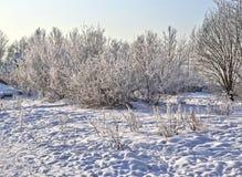 зима дня солнечная Санкт-Петербург Рыбалка Стоковые Изображения