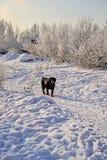 зима дня солнечная Санкт-Петербург Рыбалка Стоковые Фотографии RF