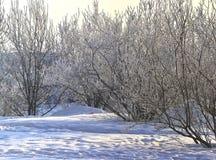 зима дня солнечная Санкт-Петербург Рыбалка Стоковая Фотография