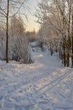 зима дня солнечная Санкт-Петербург Рыбалка Стоковая Фотография RF