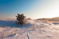 зима дня Стоковая Фотография