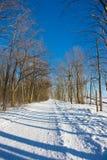 зима дня Стоковое фото RF