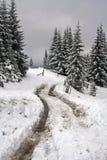 зима дороги пущи Стоковые Фотографии RF