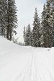 зима дороги пущи Стоковые Фото