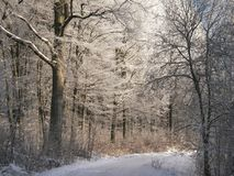 зима дороги пущи Стоковая Фотография RF