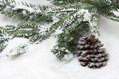 зима ели конуса Стоковые Фотографии RF