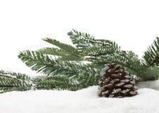 зима ели конуса Стоковые Изображения
