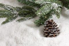 зима ели конуса Стоковая Фотография RF