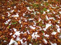 Зима, лето и осень Стоковые Фотографии RF