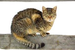 Зима. загородка, кот Стоковое Изображение