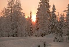 зима захода солнца пущи Стоковая Фотография