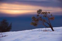 зима захода солнца Стоковые Изображения
