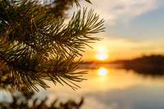 зима захода солнца снежка сосенки заморозка ветвей Стоковые Фотографии RF