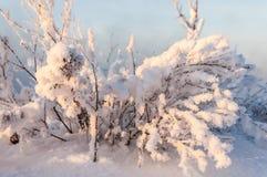 Зима, зим-прилив, зима Стоковые Фотографии RF