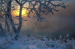 Зима, зим-прилив, зима Стоковое фото RF