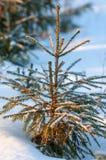 Зима, зим-прилив, зима Стоковая Фотография