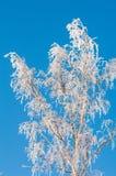 Зима, зим-прилив, зима Стоковое Изображение