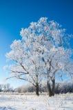 Зима, зим-прилив, зима Стоковые Фото