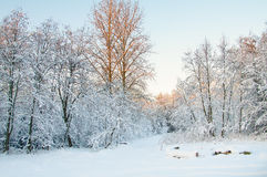 Зима, изморозь и гололедь на деревьях Стоковое Фото
