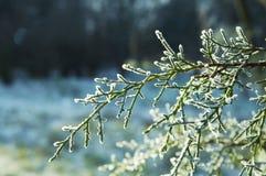 зима изображения Стоковые Изображения