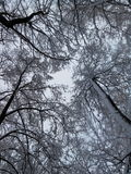 Зима и сильные снегопады Стоковое Изображение