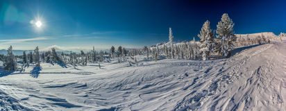 Зима и солнце Стоковая Фотография